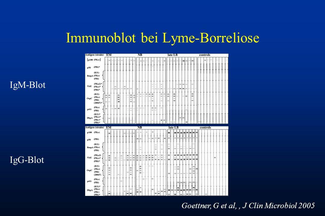 Immunoblot bei Lyme-Borreliose IgM-Blot IgG-Blot Goettner, G et al,, J Clin Microbiol 2005