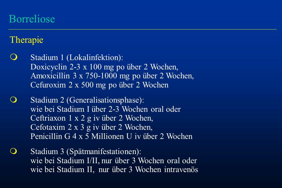 Borreliose Therapie m Stadium 1 (Lokalinfektion): Doxicyclin 2-3 x 100 mg po über 2 Wochen, Amoxicillin 3 x 750-1000 mg po über 2 Wochen, Cefuroxim 2 x 500 mg po über 2 Wochen m Stadium 2 (Generalisationsphase): wie bei Stadium I über 2-3 Wochen oral oder Ceftriaxon 1 x 2 g iv über 2 Wochen, Cefotaxim 2 x 3 g iv über 2 Wochen, Penicillin G 4 x 5 Millionen U iv über 2 Wochen m Stadium 3 (Spätmanifestationen): wie bei Stadium I/II, nur über 3 Wochen oral oder wie bei Stadium II, nur über 3 Wochen intravenös