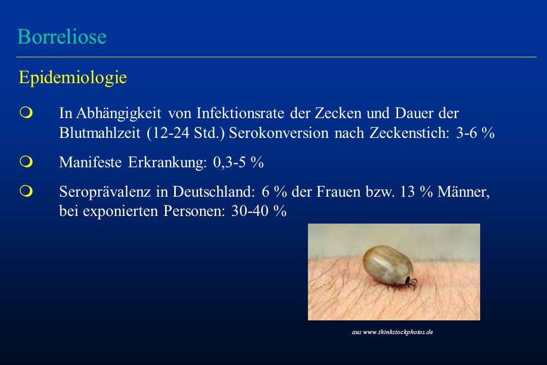 Borreliose Epidemiologie m In Abhängigkeit von Infektionsrate der Zecken und Dauer der Blutmahlzeit (12-24 Std.) Serokonversion nach Zeckenstich: 3-6 % m Manifeste Erkrankung: 0,3-5 % m Seroprävalenz in Deutschland: 6 % der Frauen bzw.
