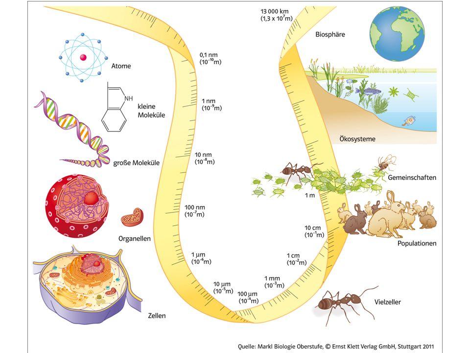 1.Moleküle 2. Zellmembran Dicke 3. Viren 6. die meisten Zellen 4.