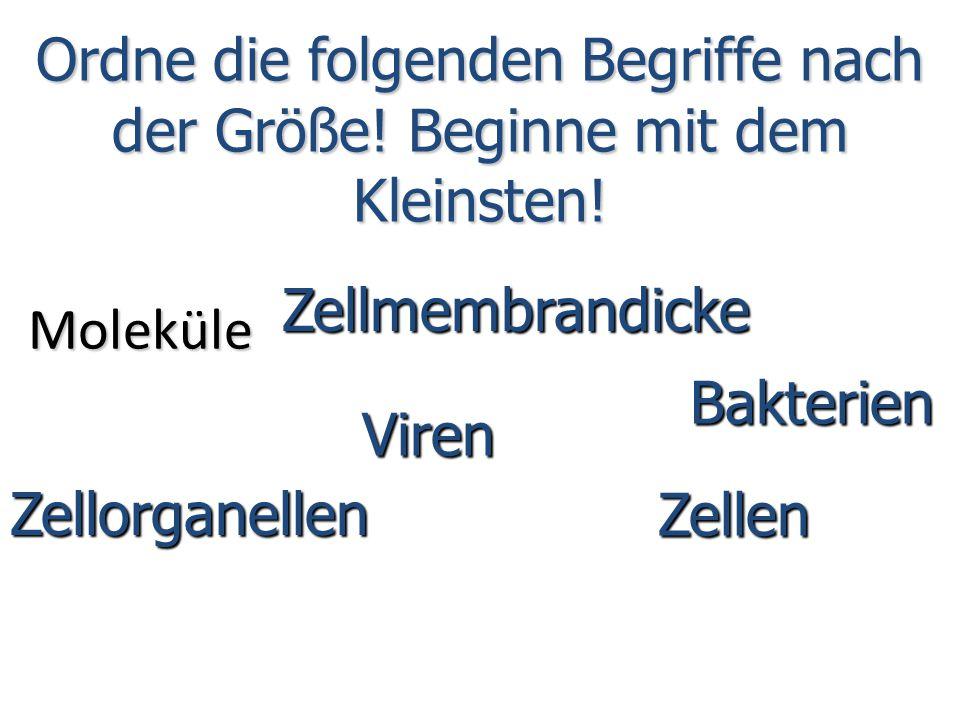 Moleküle Zellmembrandicke Viren Zellen Zellorganellen Bakterien Ordne die folgenden Begriffe nach der Größe.