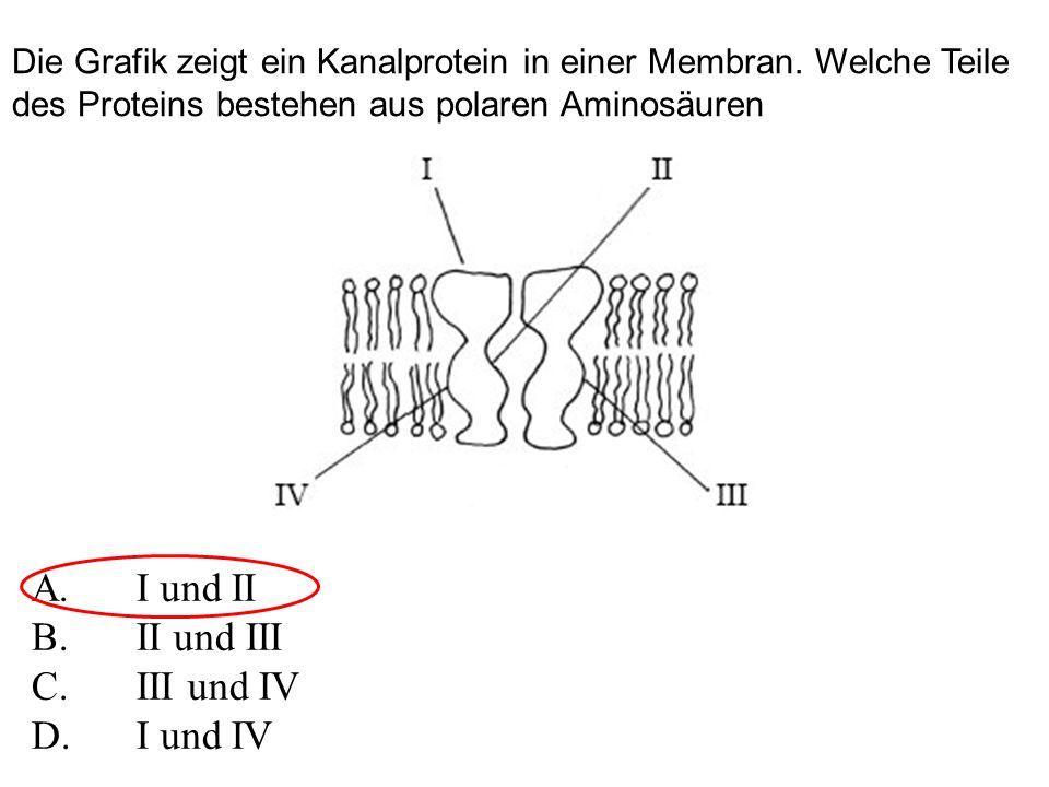 Die Grafik zeigt ein Kanalprotein in einer Membran.