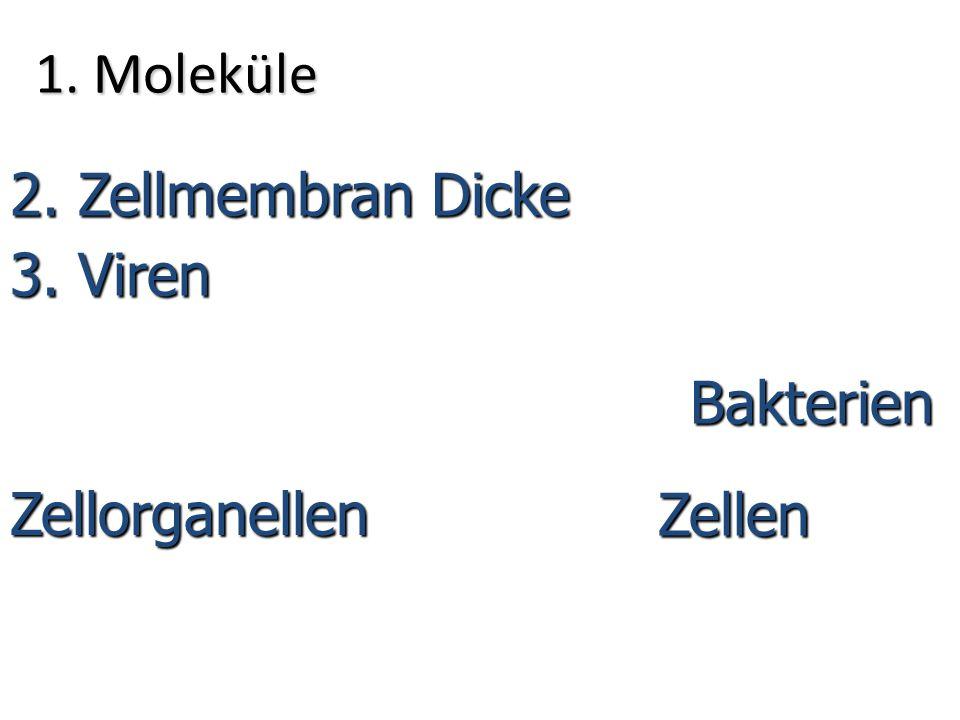 1. Moleküle 2. Zellmembran Dicke 3. Viren Zellen 4. Bakterien