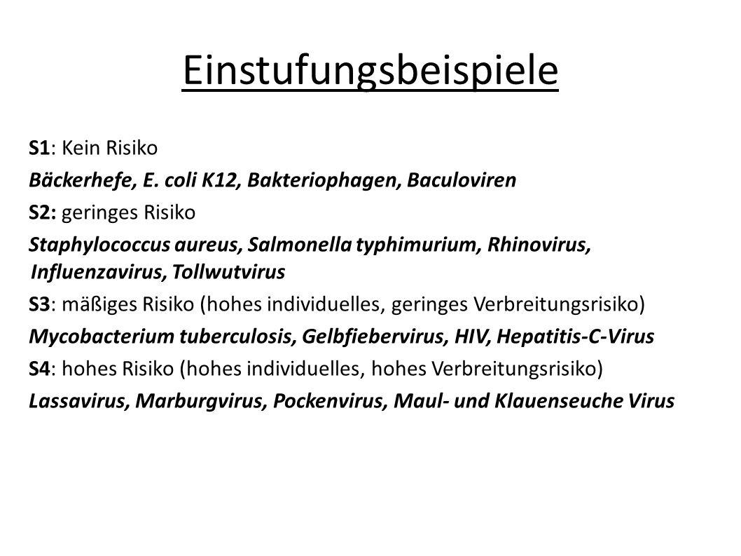 Einstufungsbeispiele S1: Kein Risiko Bäckerhefe, E. coli K12, Bakteriophagen, Baculoviren S2: geringes Risiko Staphylococcus aureus, Salmonella typhim