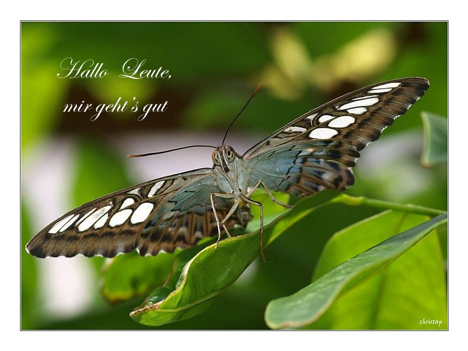 """Auferstehung..beten zum Himmel Ra """"Beende das triste Raupenleben und mach einen schönen Schmetterling aus mir."""""""