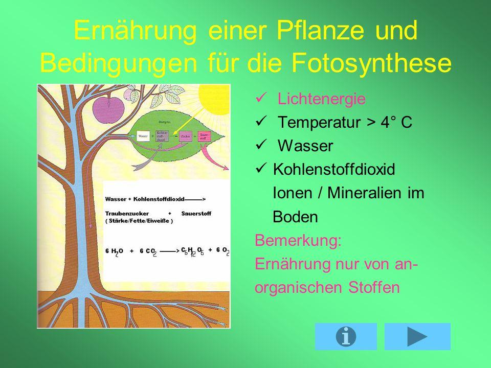 Inhaltsverzeichnis 1. Ernährung einer Pflanze und Bedingungen für die Fotosynthese 2. Licht und Dunkelreaktion 3. Bedeutung für die Lebewesen 4. Bedeu