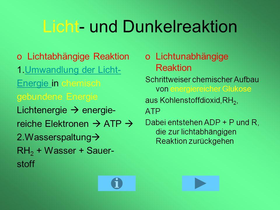 Ernährung einer Pflanze und Bedingungen für die Fotosynthese Lichtenergie Temperatur > 4° C Wasser Kohlenstoffdioxid Ionen / Mineralien im Boden Bemer