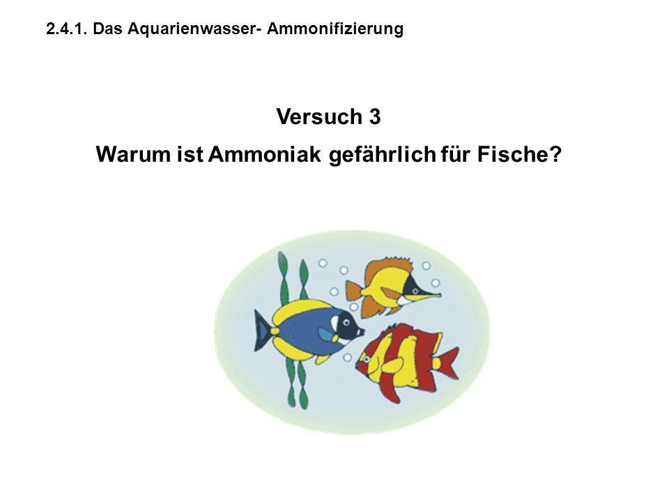 2.4.1. Das Aquarienwasser- Ammonifizierung Versuch 3 Warum ist Ammoniak gefährlich für Fische?