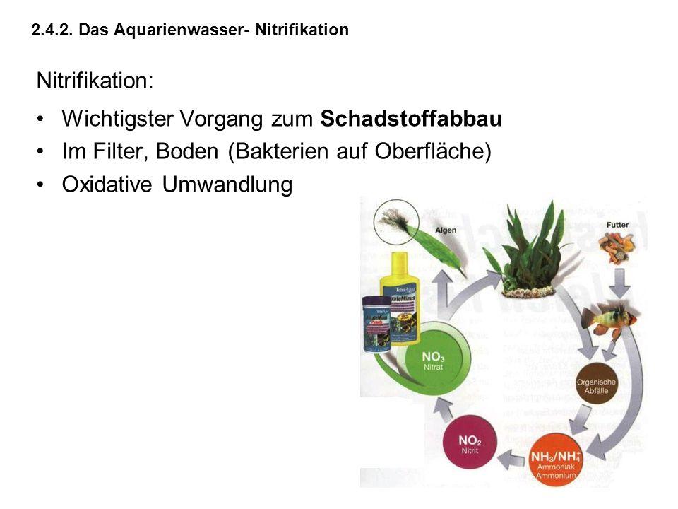 2.4.2. Das Aquarienwasser- Nitrifikation Nitrifikation: Wichtigster Vorgang zum Schadstoffabbau Im Filter, Boden (Bakterien auf Oberfläche) Oxidative