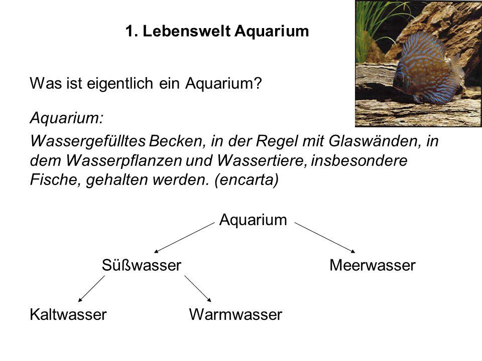 1. Lebenswelt Aquarium Was ist eigentlich ein Aquarium? Aquarium: Wassergefülltes Becken, in der Regel mit Glaswänden, in dem Wasserpflanzen und Wasse
