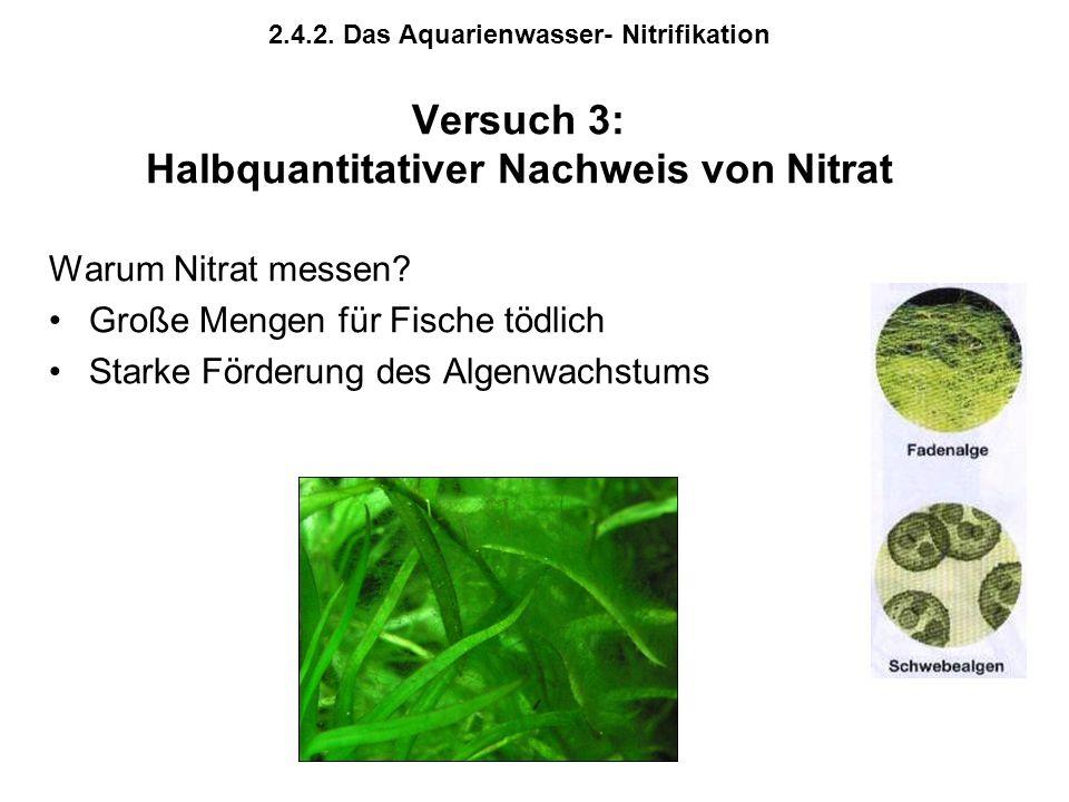 2.4.2. Das Aquarienwasser- Nitrifikation Versuch 3: Halbquantitativer Nachweis von Nitrat Warum Nitrat messen? Große Mengen für Fische tödlich Starke
