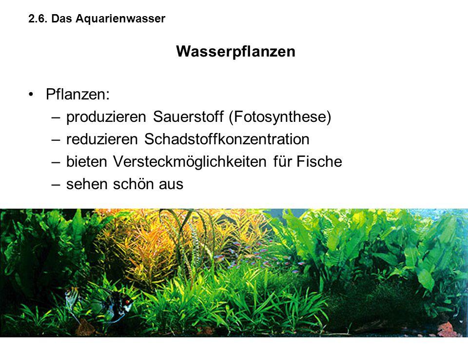 2.6. Das Aquarienwasser Pflanzen: –produzieren Sauerstoff (Fotosynthese) –reduzieren Schadstoffkonzentration –bieten Versteckmöglichkeiten für Fische