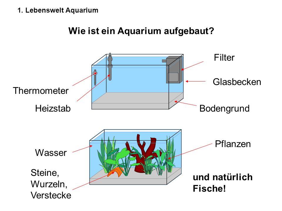 1. Lebenswelt Aquarium Wie ist ein Aquarium aufgebaut? Filter Bodengrund Glasbecken Heizstab Thermometer Wasser Pflanzen Steine, Wurzeln, Verstecke un