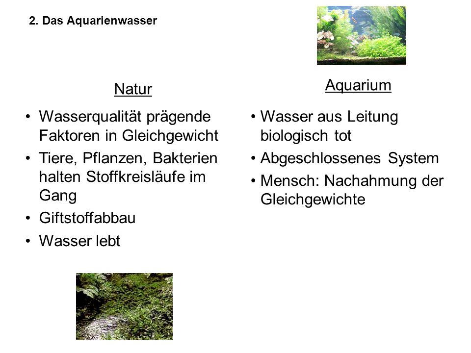 2. Das Aquarienwasser Natur Aquarium Wasserqualität prägende Faktoren in Gleichgewicht Tiere, Pflanzen, Bakterien halten Stoffkreisläufe im Gang Gifts