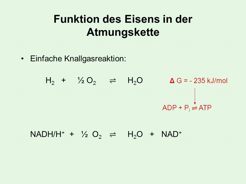 Funktion des Eisens in der Atmungskette Einfache Knallgasreaktion: H 2 + ½ O 2 ⇌ H 2 O Δ G = - 235 kJ/mol NADH/H + + ½ O 2 ⇌ H 2 O + NAD + ADP + P i ⇌