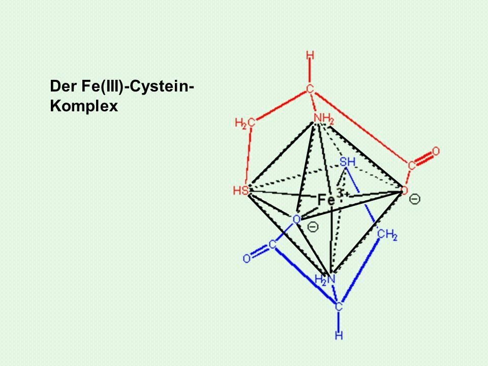 Der Fe(III)-Cystein- Komplex