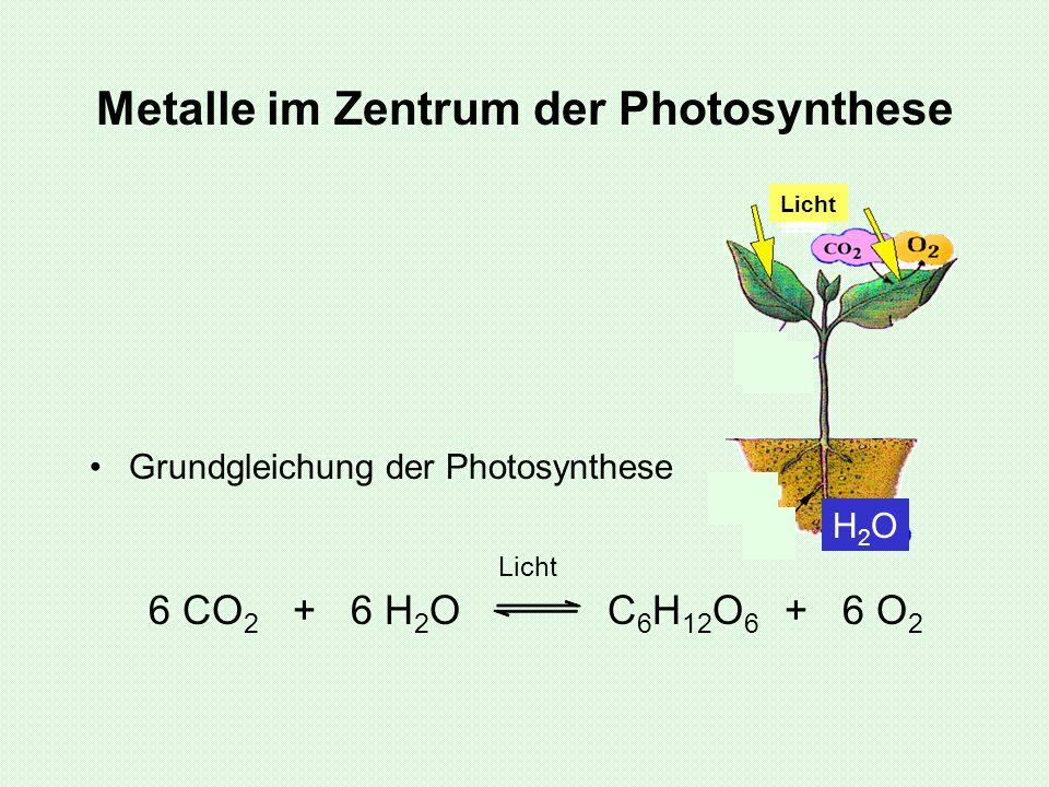 Metalle im Zentrum der Photosynthese Grundgleichung der Photosynthese Licht 6 CO 2 + 6 H 2 O C 6 H 12 O 6 + 6 O 2 H2OH2O Licht