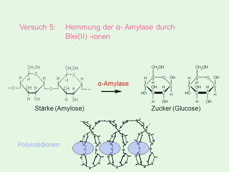 Stärke (Amylose) α-Amylase Zucker (Glucose) Versuch 5: Hemmung der α- Amylase durch Blei(II) -ionen Polyiodidionen