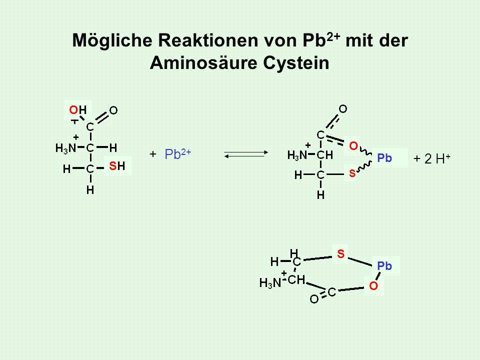 Mögliche Reaktionen von Pb 2+ mit der Aminosäure Cystein + SHSH + OHOH + Pb 2+ + O S Pb O S + + 2 H +