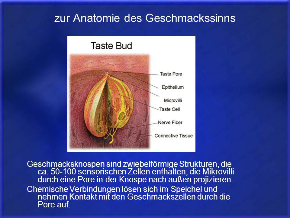 zur Anatomie des Geschmackssinns Geschmacksknospen sind zwiebelförmige Strukturen, die ca. 50-100 sensorischen Zellen enthalten, die Mikrovilli durch