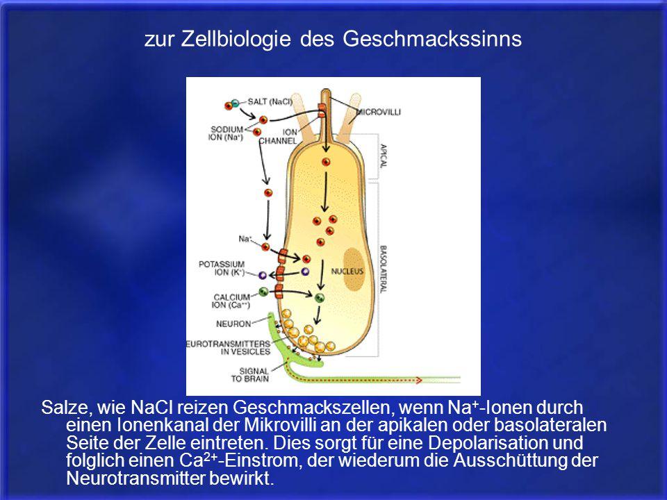 zur Zellbiologie des Geschmackssinns Salze, wie NaCl reizen Geschmackszellen, wenn Na + -Ionen durch einen Ionenkanal der Mikrovilli an der apikalen o