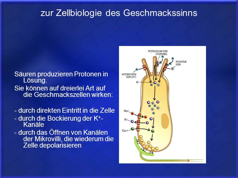zur Zellbiologie des Geschmackssinns Säuren produzieren Protonen in Lösung. Sie können auf dreierlei Art auf die Geschmackszellen wirken: - durch dire