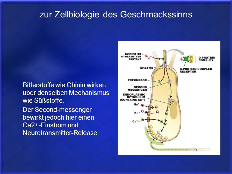 zur Zellbiologie des Geschmackssinns Bitterstoffe wie Chinin wirken über denselben Mechanismus wie Süßstoffe. Der Second-messenger bewirkt jedoch hier