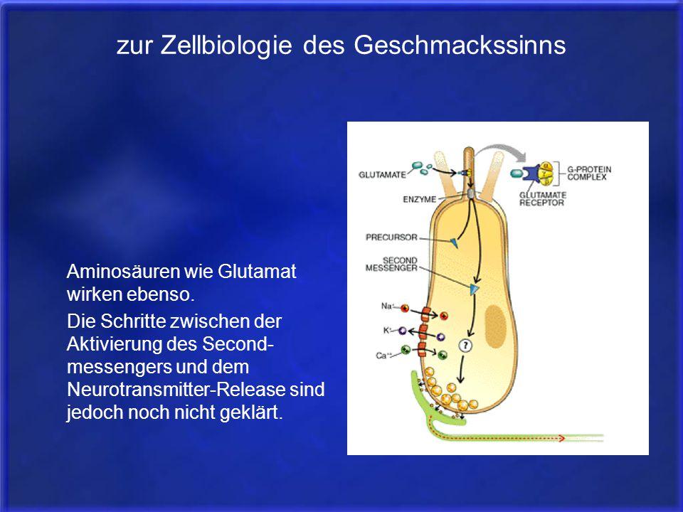 zur Zellbiologie des Geschmackssinns Aminosäuren wie Glutamat wirken ebenso. Die Schritte zwischen der Aktivierung des Second- messengers und dem Neur