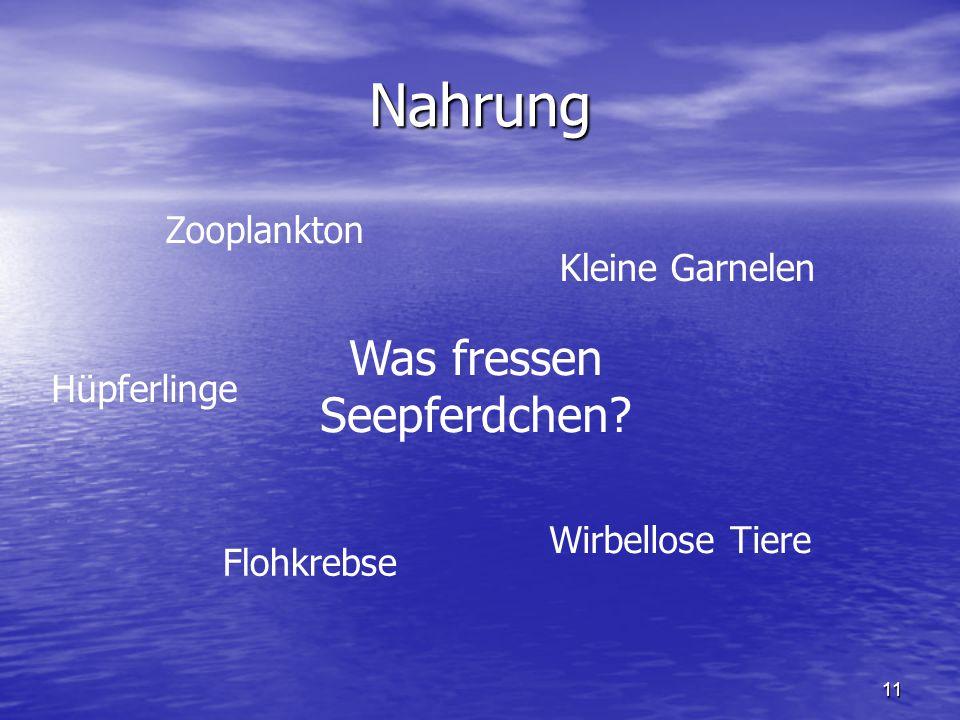 11 Nahrung Was fressen Seepferdchen? Zooplankton Kleine Garnelen Flohkrebse Wirbellose Tiere Hüpferlinge