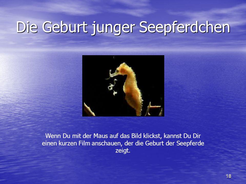 18 Die Geburt junger Seepferdchen Wenn Du mit der Maus auf das Bild klickst, kannst Du Dir einen kurzen Film anschauen, der die Geburt der Seepferde z
