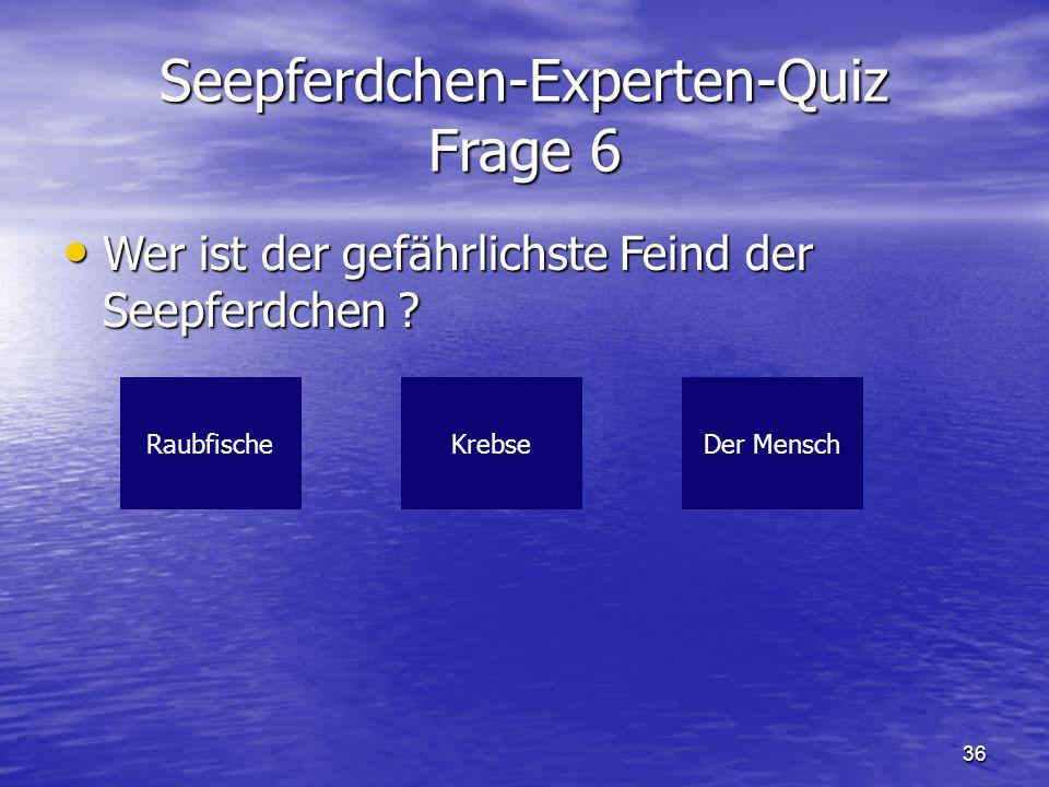 36 Seepferdchen-Experten-Quiz Frage 6 Wer ist der gefährlichste Feind der Seepferdchen ? Wer ist der gefährlichste Feind der Seepferdchen ? Raubfische