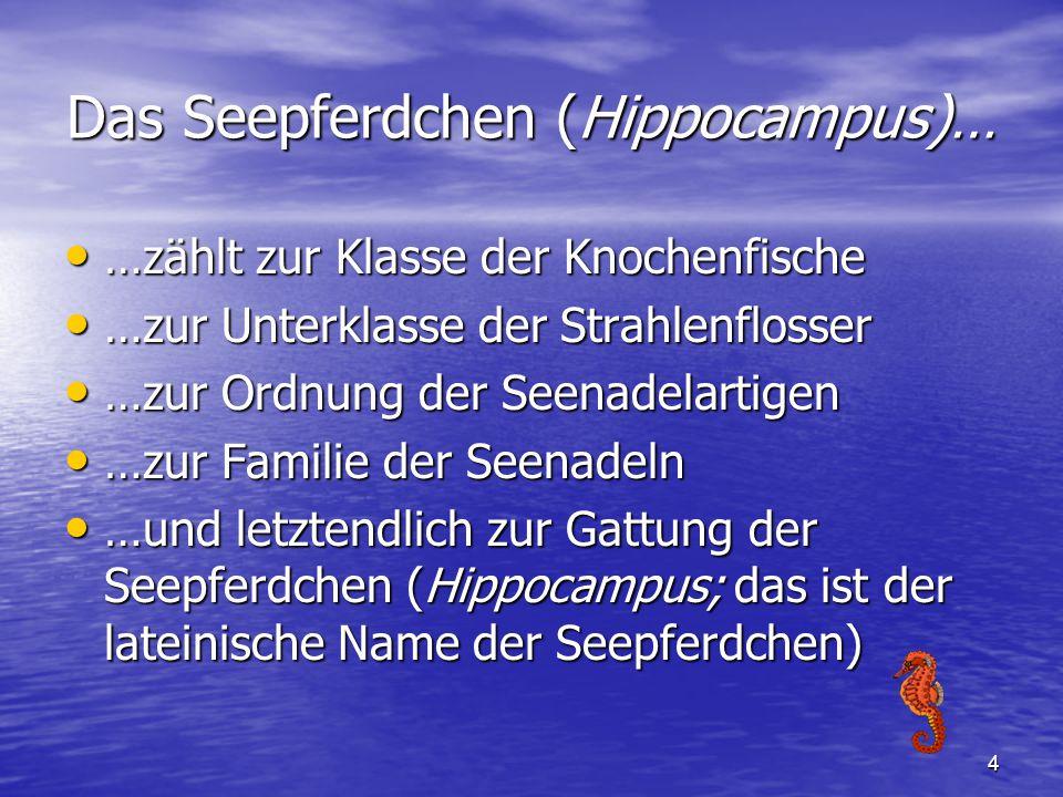4 Das Seepferdchen (Hippocampus)… …zählt zur Klasse der Knochenfische …zählt zur Klasse der Knochenfische …zur Unterklasse der Strahlenflosser …zur Un