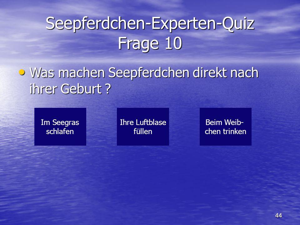 44 Seepferdchen-Experten-Quiz Frage 10 Was machen Seepferdchen direkt nach ihrer Geburt ? Was machen Seepferdchen direkt nach ihrer Geburt ? Im Seegra
