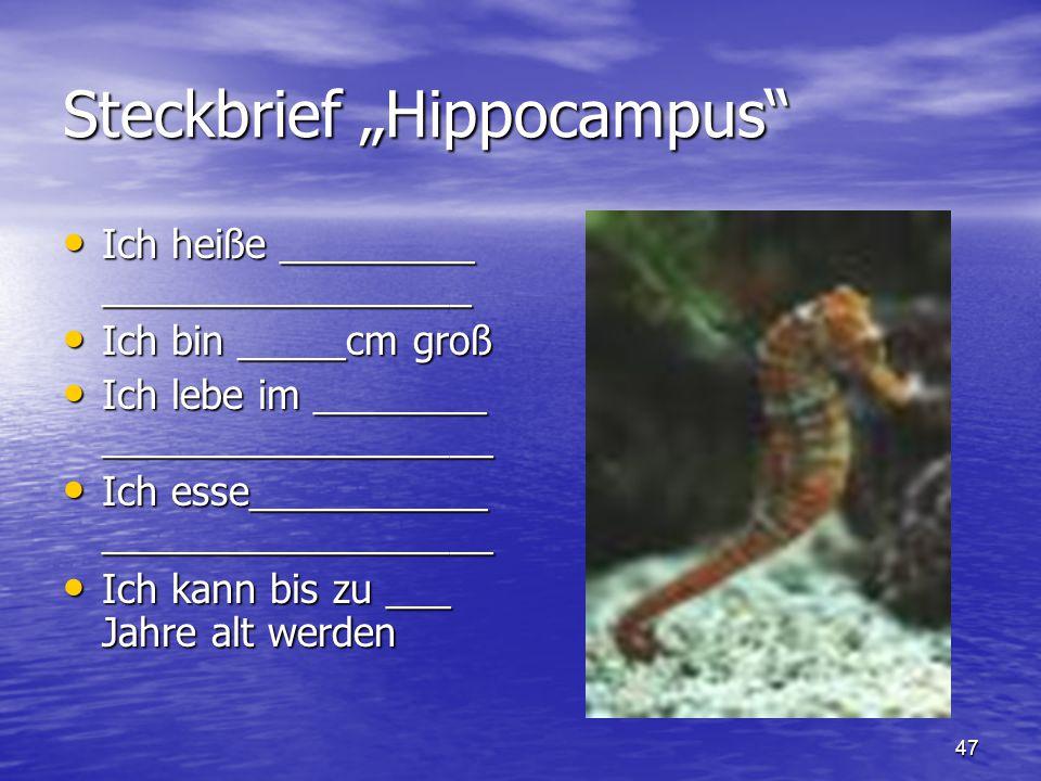 """47 Steckbrief """"Hippocampus"""" Ich heiße _________ _________________ Ich heiße _________ _________________ Ich bin _____cm groß Ich bin _____cm groß Ich"""