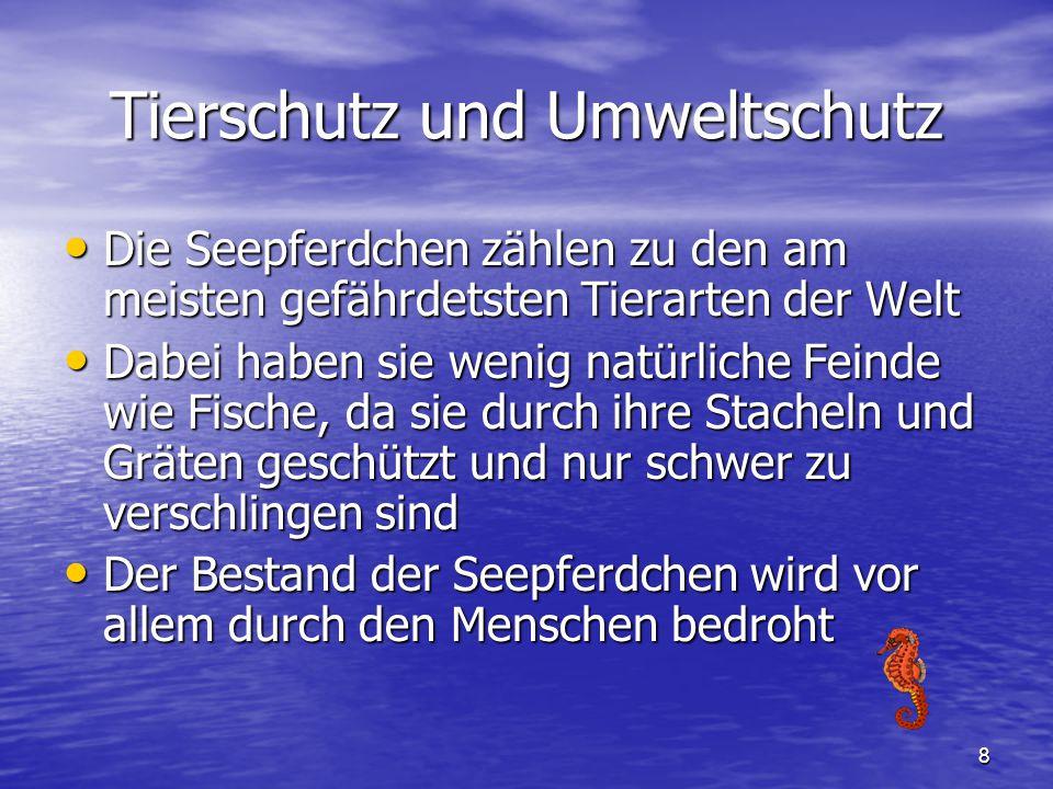 8 Tierschutz und Umweltschutz Die Seepferdchen zählen zu den am meisten gefährdetsten Tierarten der Welt Die Seepferdchen zählen zu den am meisten gef