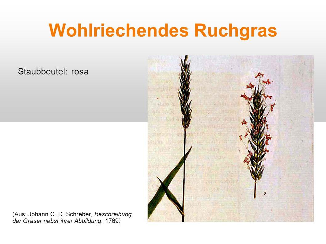 Wohlriechendes Ruchgras Staubbeutel: rosa (Aus: Johann C. D. Schreber, Beschreibung der Gräser nebst ihrer Abbildung, 1769)