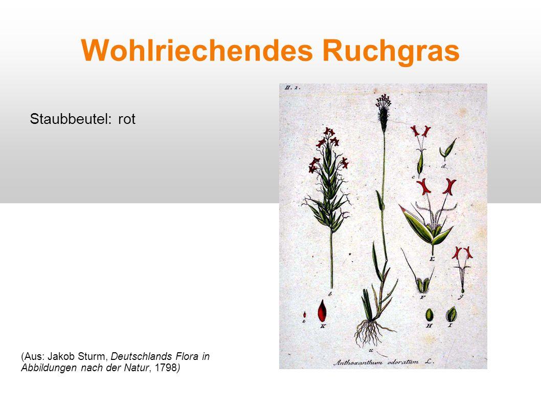 Wohlriechendes Ruchgras Staubbeutel: rot (Aus: Jakob Sturm, Deutschlands Flora in Abbildungen nach der Natur, 1798)