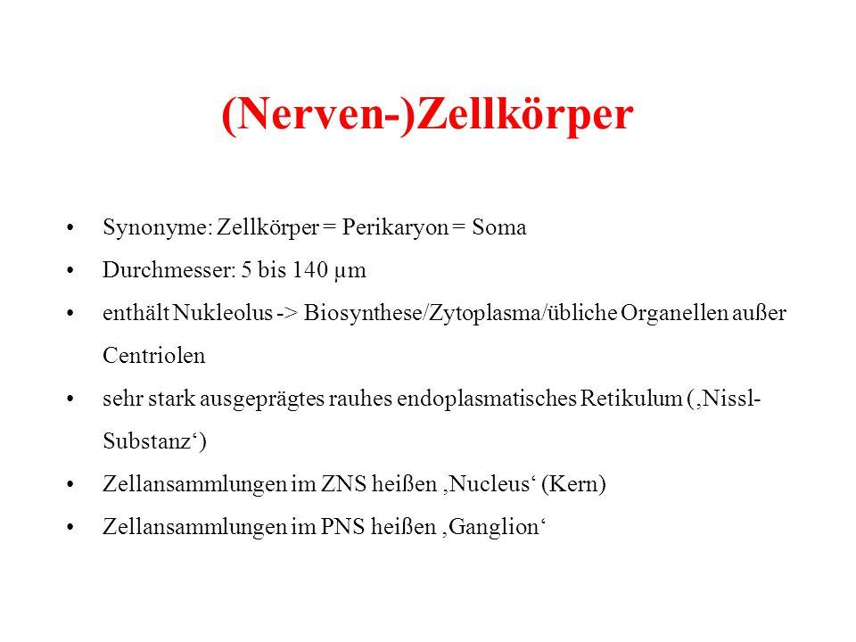 (Nerven-)Zellkörper Synonyme: Zellkörper = Perikaryon = Soma Durchmesser: 5 bis 140 µm enthält Nukleolus -> Biosynthese/Zytoplasma/übliche Organellen