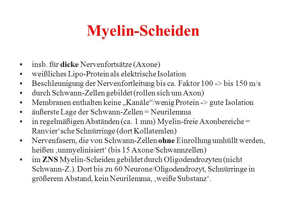Myelin-Scheiden insb. für dicke Nervenfortsätze (Axone) weißliches Lipo-Protein als elektrische Isolation Beschleunigung der Nervenfortleitung bis ca.