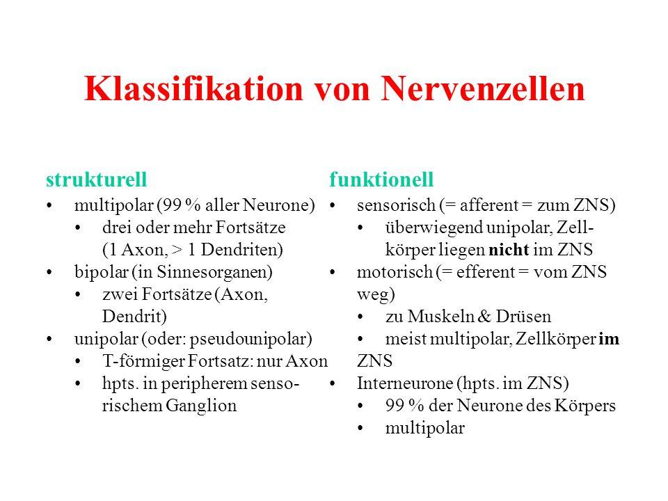 Klassifikation von Nervenzellen strukturellfunktionell multipolar (99 % aller Neurone)sensorisch (= afferent = zum ZNS) drei oder mehr Fortsätze überw