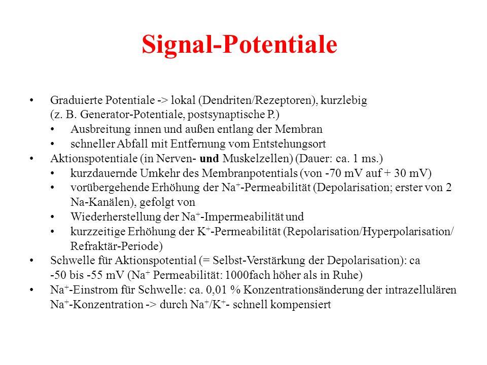 Signal-Potentiale Graduierte Potentiale -> lokal (Dendriten/Rezeptoren), kurzlebig (z. B. Generator-Potentiale, postsynaptische P.) Ausbreitung innen