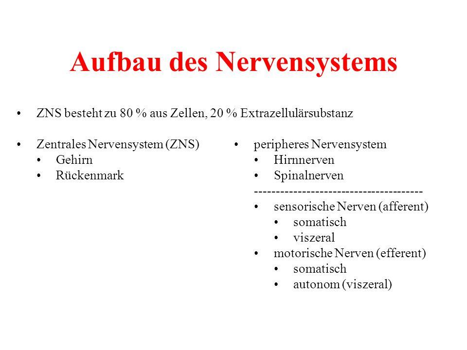 Aufbau des Nervensystems ZNS besteht zu 80 % aus Zellen, 20 % Extrazellulärsubstanz Zentrales Nervensystem (ZNS)peripheres Nervensystem GehirnHirnnerv