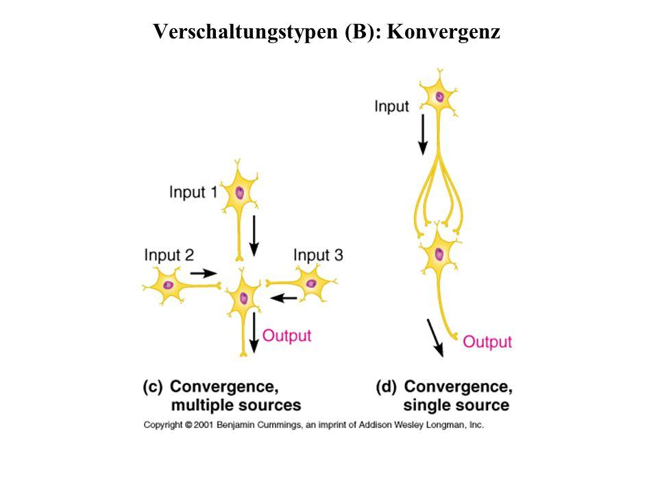 Verschaltungstypen (B): Konvergenz