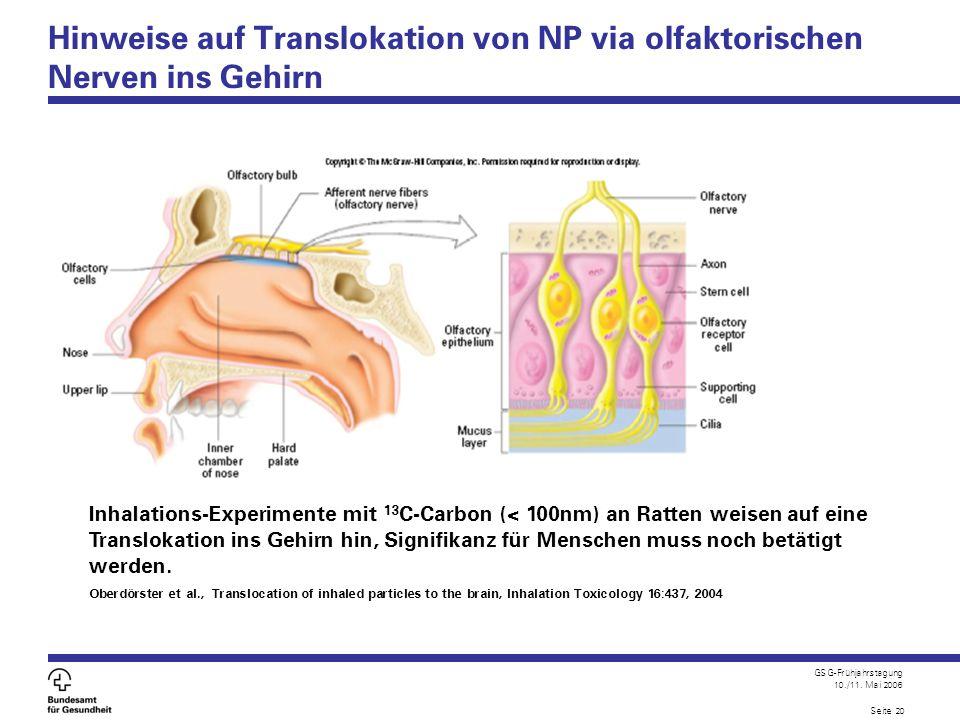 GSG-Frühjahrstagung 10./11. Mai 2006 Seite 20 Hinweise auf Translokation von NP via olfaktorischen Nerven ins Gehirn Inhalations-Experimente mit 13 C-
