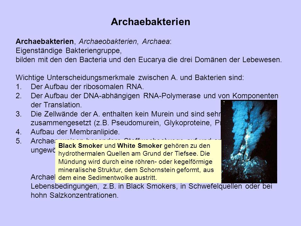 Archaebakterien Archaebakterien, Archaeobakterien, Archaea: Eigenständige Bakteriengruppe, bilden mit den den Bacteria und den Eucarya die drei Domäne