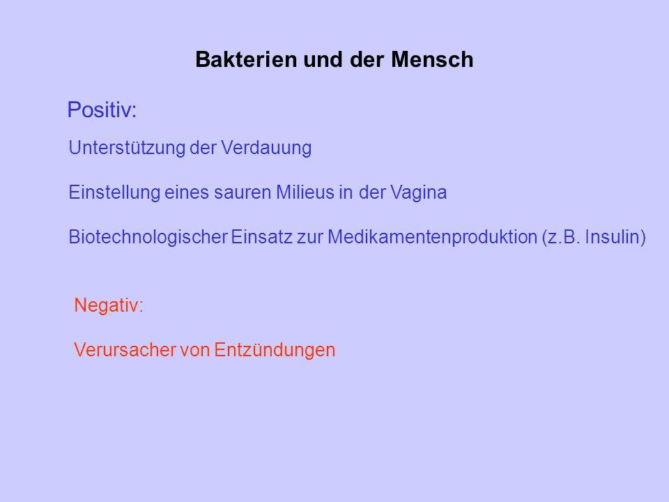 Bakterien und der Mensch Positiv: Unterstützung der Verdauung Einstellung eines sauren Milieus in der Vagina Biotechnologischer Einsatz zur Medikament