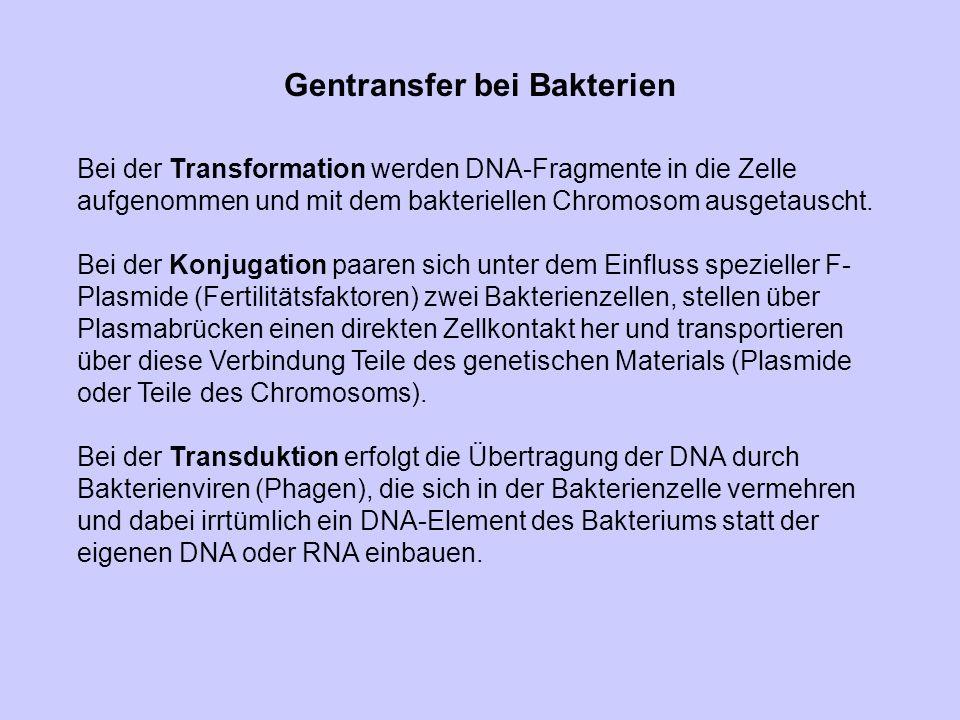 Gentransfer bei Bakterien Bei der Transformation werden DNA-Fragmente in die Zelle aufgenommen und mit dem bakteriellen Chromosom ausgetauscht. Bei de