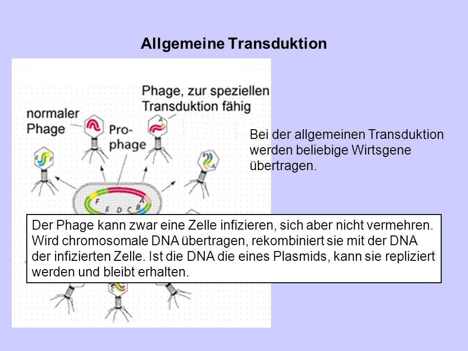 Allgemeine Transduktion Der Phage kann zwar eine Zelle infizieren, sich aber nicht vermehren. Wird chromosomale DNA übertragen, rekombiniert sie mit d