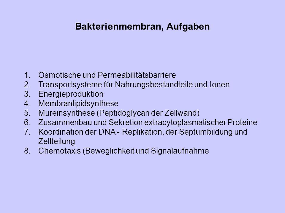 Bakterienmembran, Aufgaben 1.Osmotische und Permeabilitätsbarriere 2.Transportsysteme für Nahrungsbestandteile und Ionen 3.Energieproduktion 4.Membran