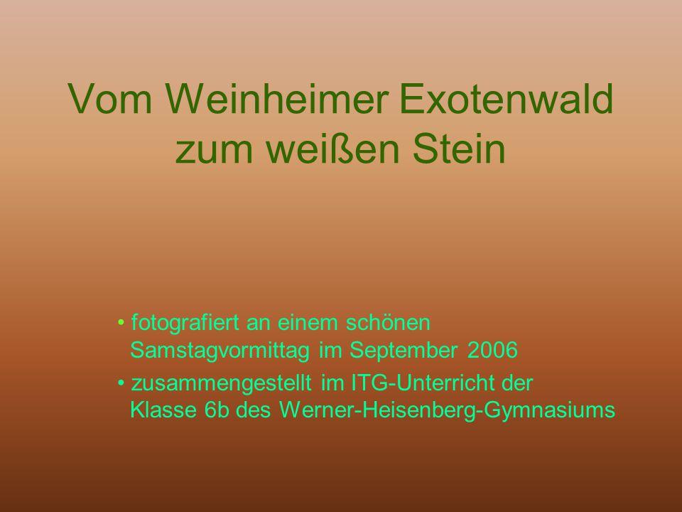 Vom Weinheimer Exotenwald zum weißen Stein fotografiert an einem schönen Samstagvormittag im September 2006 zusammengestellt im ITG-Unterricht der Kla